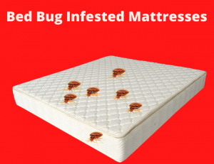 How to Get Rid Of a Queen Size Mattress